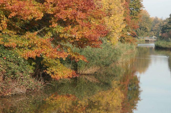 Herfst Schollebos 2