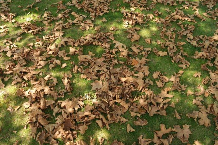 Bruin blad op groen gras
