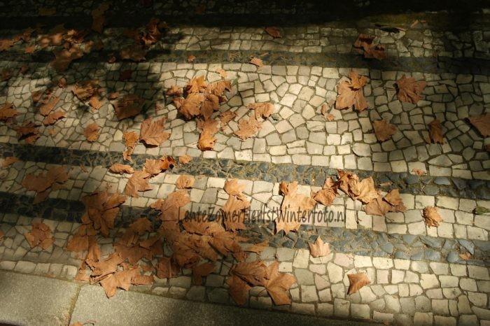 Noord Portugal - Bruin blad op straattegeltjes