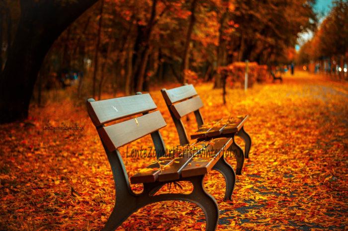 bankje park herfst