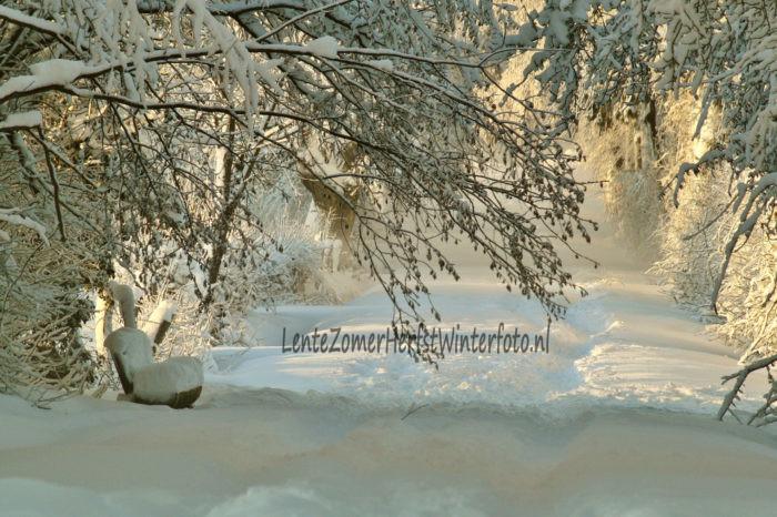 Winterfoto besneeuwd bankje