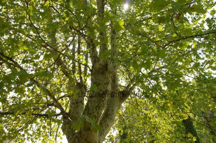 Zonlicht door boomtakken