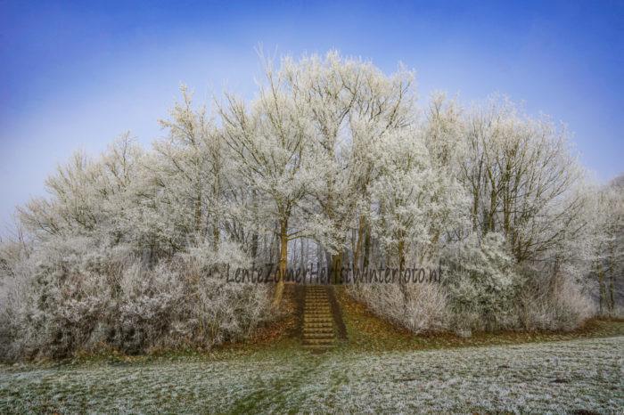 winterfoto vorst takken