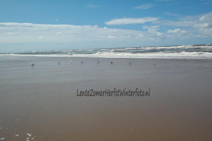 Noordwijk aan Zee - kokmeeuwen - strand - jaargetijde - zomer.jpg